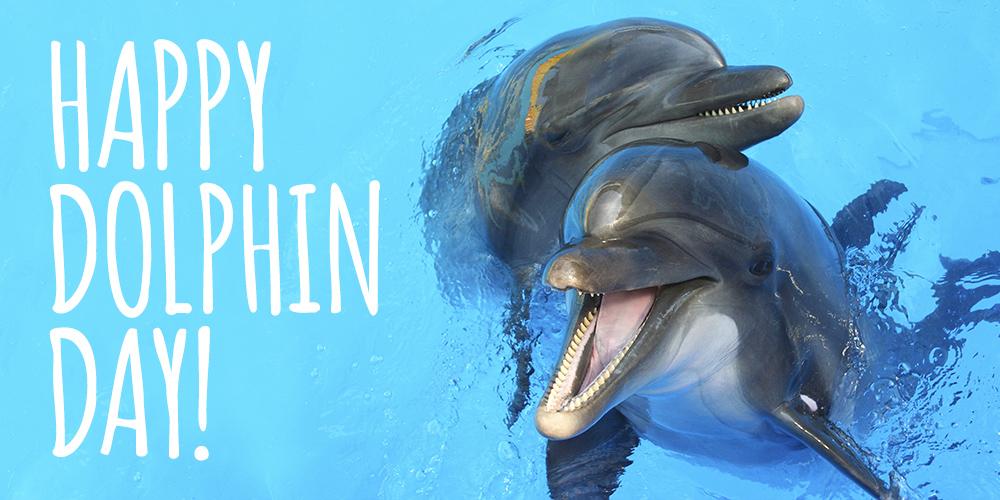 happydolphins